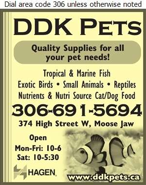 DDK Pets N Points - Pet Supplies & Foods Retail Digital Ad