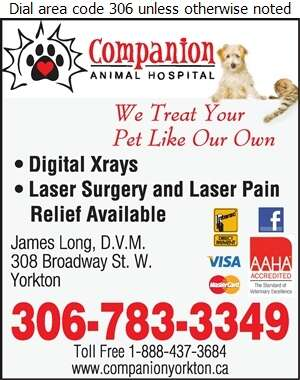 Companion Animal Hospital (AFTER HOURS CALL) - Veterinarians Digital Ad
