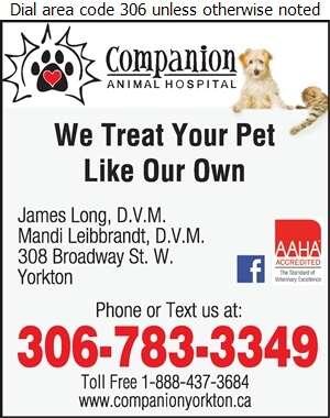 Companion Animal Hospital (AFTER HOURS CALL) - Veterinarians Digital Ad