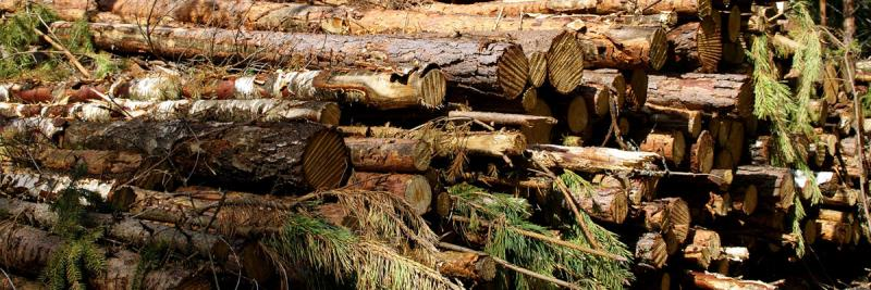 Schwinghammer's Tree Service