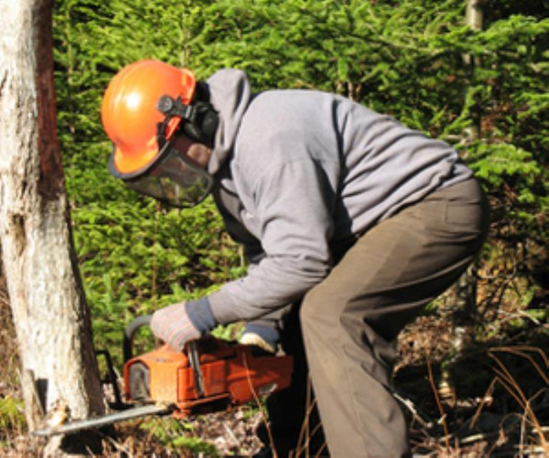 Schwinghammer's Tree Service - Tree Removal