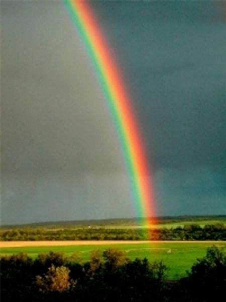 Westwood Turf Rainbow